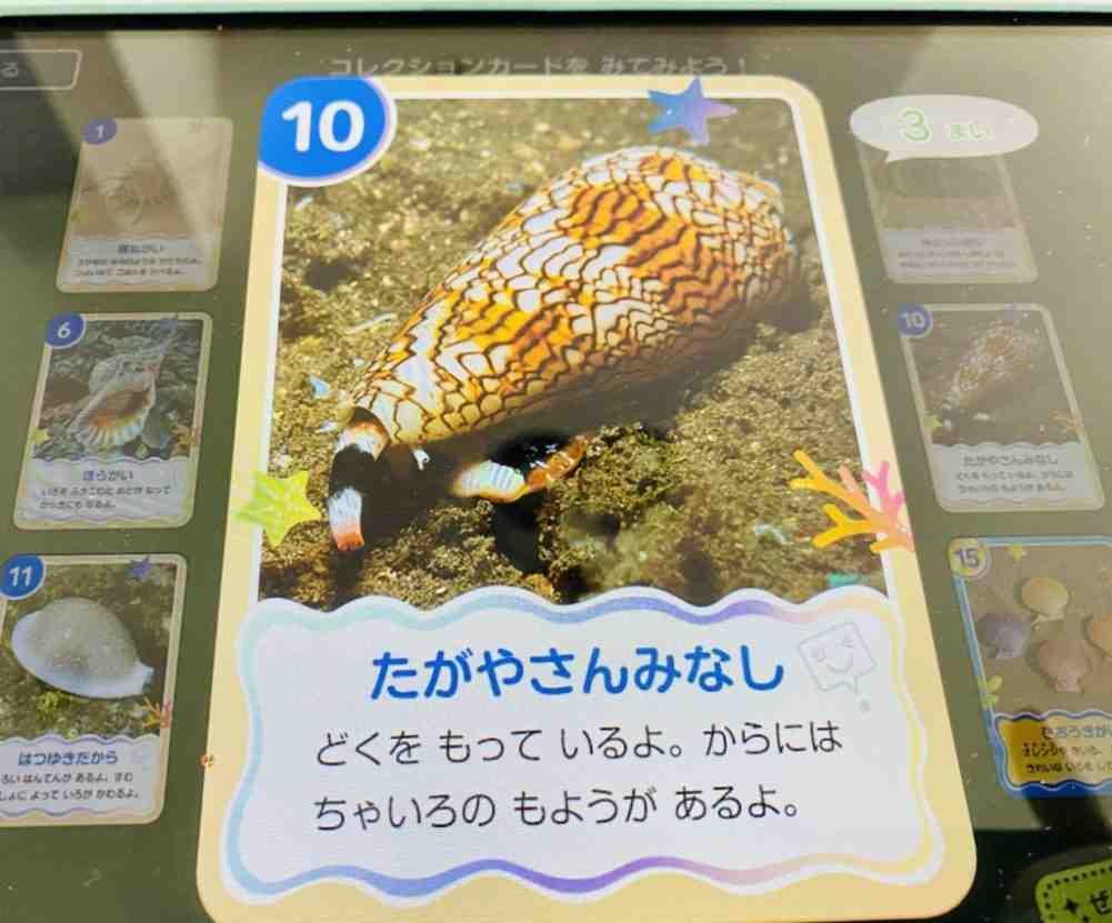 スマイルゼミご褒美カード貝